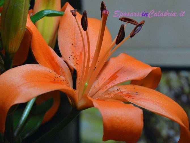 Lilium fiori matrimonio