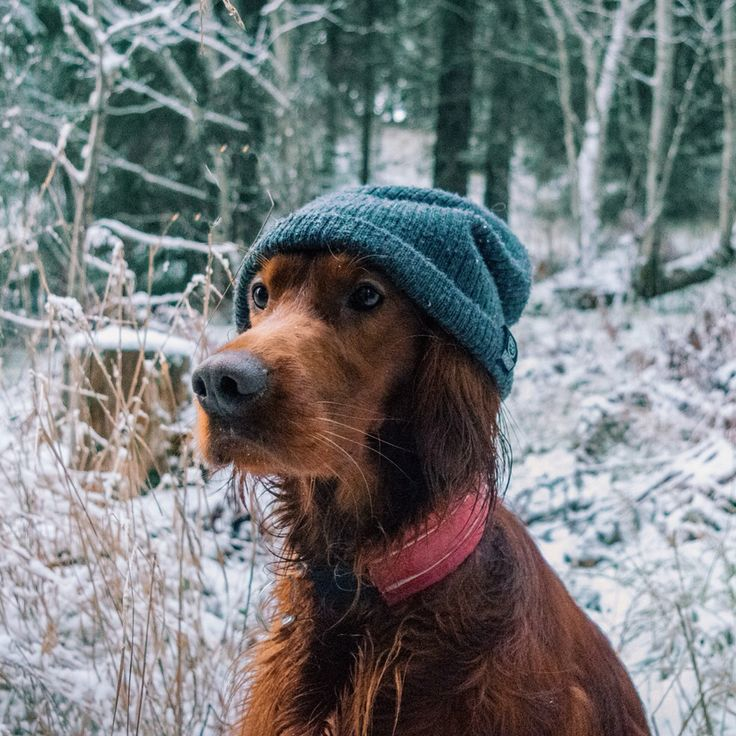 Hipster dog - Tap the pin for the most adorable pawtastic fur baby apparel! You'll love the dog clothes and cat clothes! <3