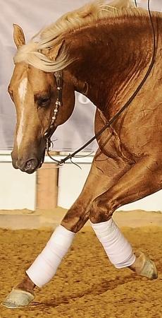Cattleman's Cash - Stallion Directory