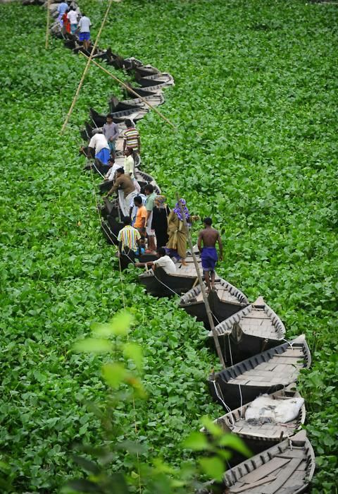 A walk across a floating boat bridge on the Buriganga river in Dhaka. Water hyacinth has hampered the movement of boats on the river so boats are tied together to form a temporary bridge.