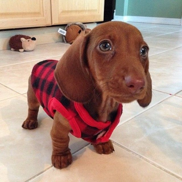 Instagram Photo -- Follow us @Redbarn Pet Products | Flickr - Photo Sharing!