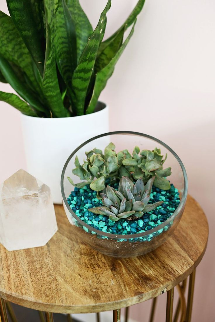 Try this- Use aquarium rocks to add color to your plant projects at home!