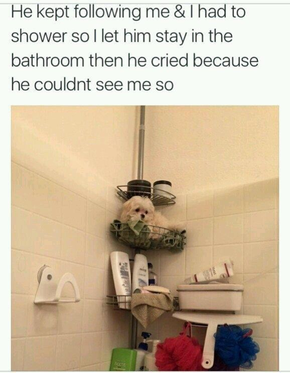 25 Memes That Shock And Laugh – Funnyfoto | Funny Pictures - Videos - Gifs - Page 21