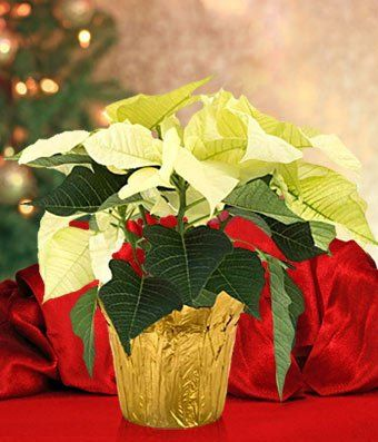 Fiori Italian  Eshopclub Same Day Flower Delivery  Fresh Flowers  Wedding Flowers Bouquets  Birthday Flowers  Send Flowers >>> Click on the image for additional details.