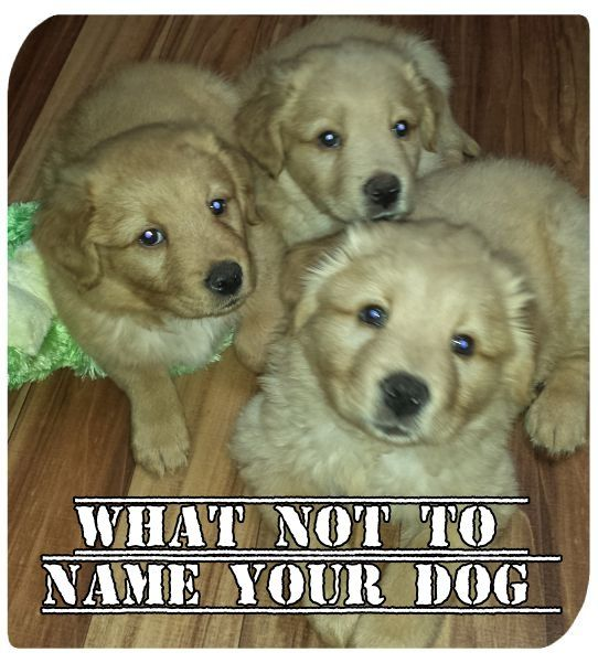 Naming a new dog isn't always an easy task. We struggled with names for ours, until we decided to go with band names. Thus they became Ozzy Osbourne, Jackyl, Chewy Lewis (and the News), Great White, Meatloaf, Santana, Pantera and our little Monkey. Of course, I do wonder sometimes what the people at the church …