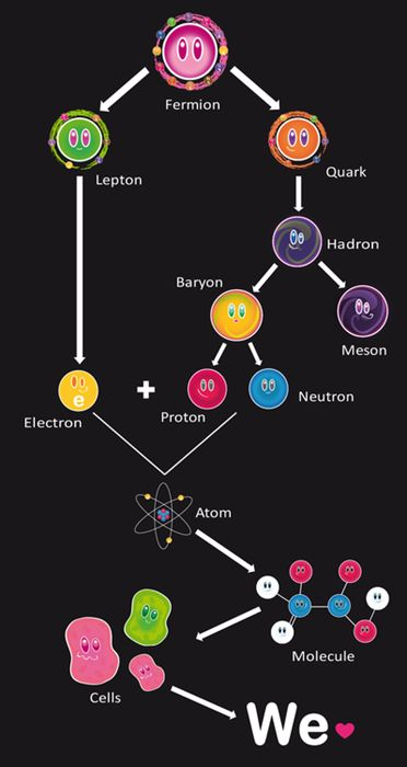 From Particles to Cells