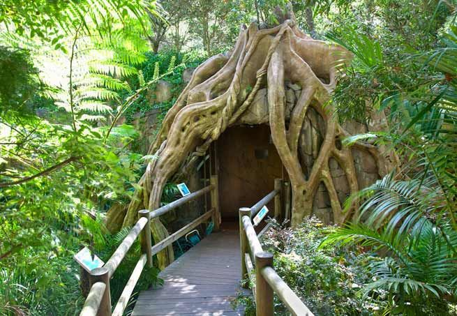 Tamborine Mountain Glow Worm Caves - A Magical Experience