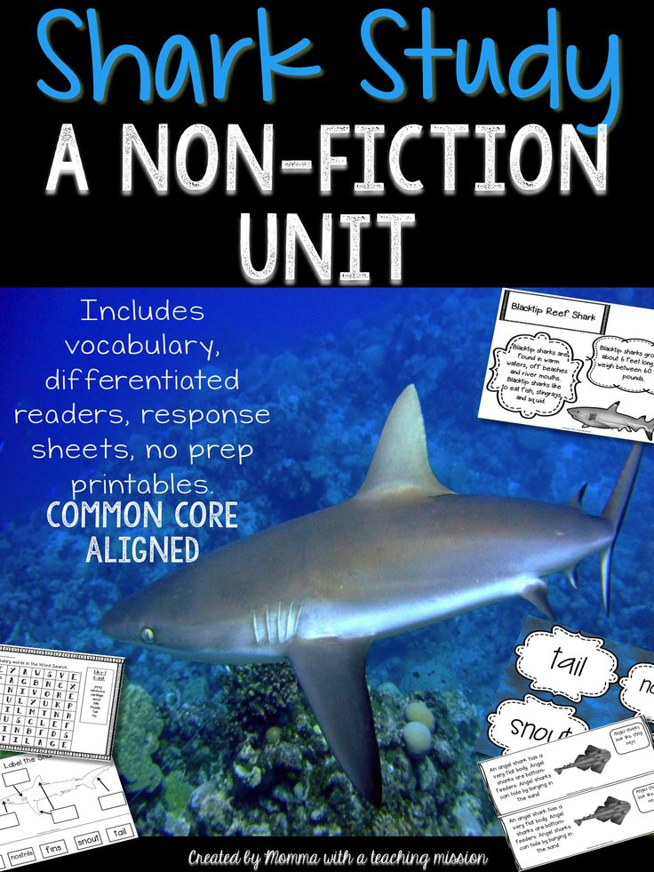 A non-fiction unit all about sharks! This unit includes key vocabulary words, differentiated readers, poster visuals, vocabulary book, print & go printables. This is perfect for 1st and 2nd graders. What kiddos don't love learning about sharks!!? And it's all common core aligned!