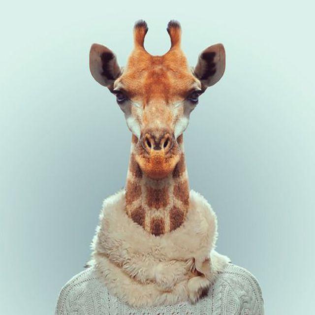 Fashion Zoo Animals7 – Fubiz™