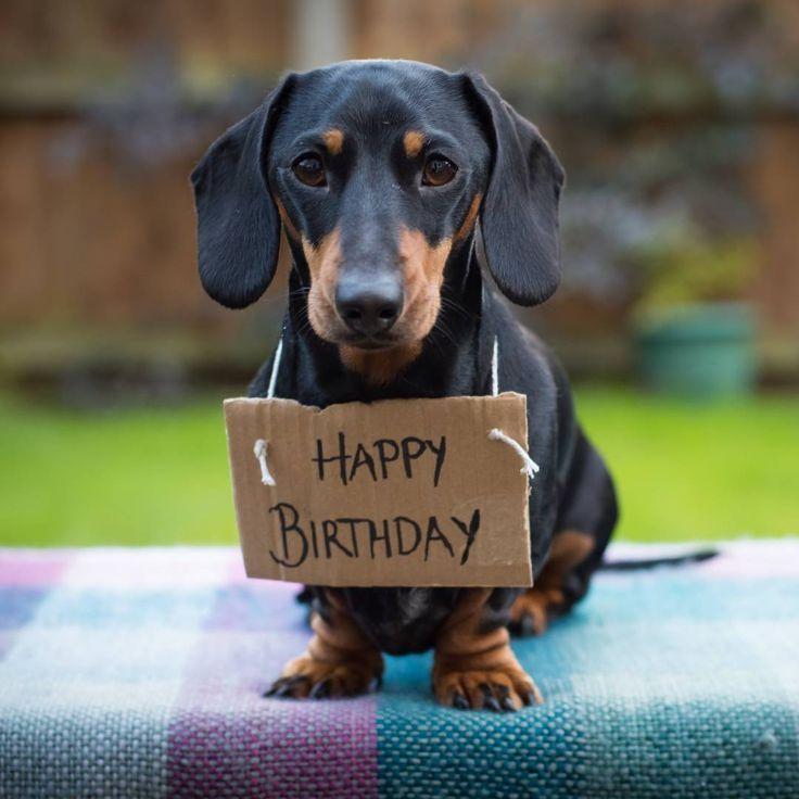 Поздравительная открытка таксы, днем рождения подруге
