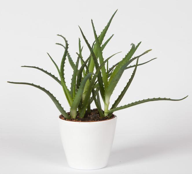 Pin By Zofia On Kwiaty Doniczkowe Planters Plants Planter Pots