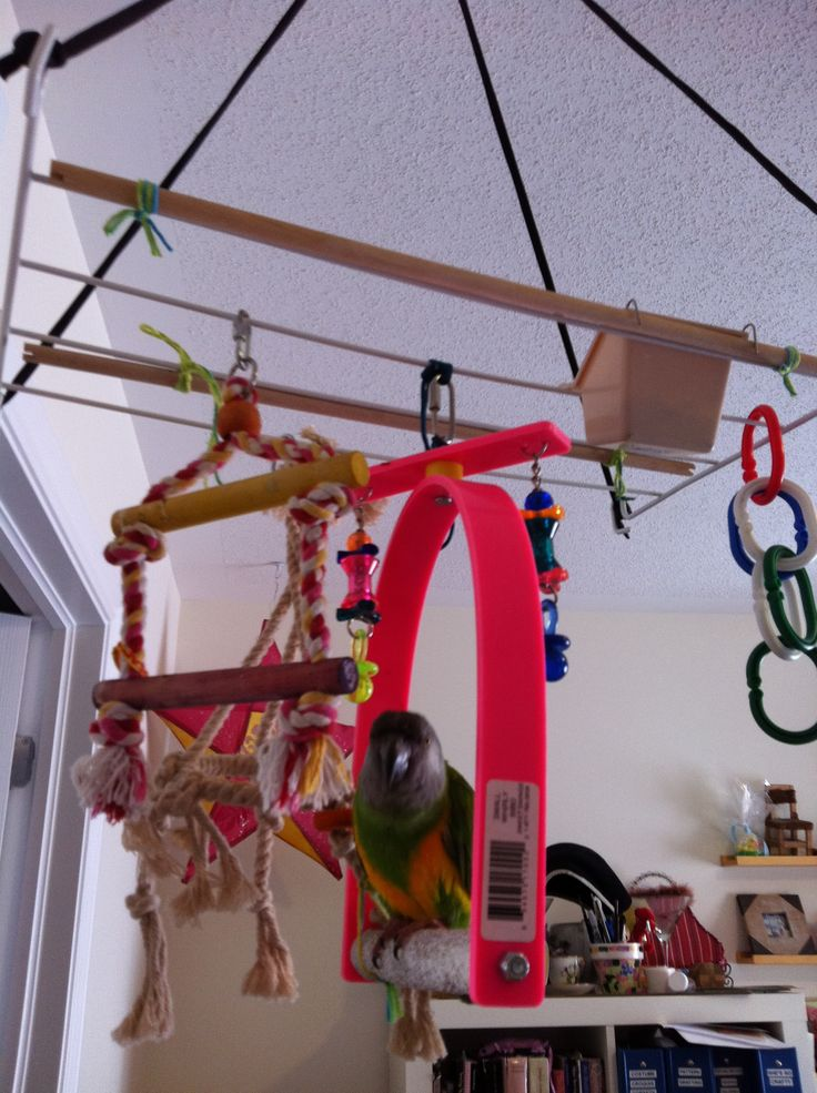 Awesome parrot play gym from an old clothes drying rack