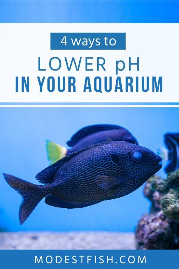 How To Safely Lower Ph In Your Aquarium And Keep It Stable Fish Care Aquarium Aquarium Set