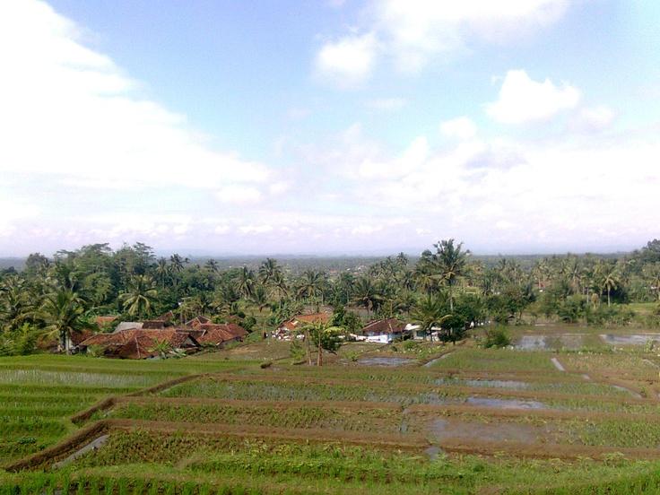 rice field. simple beauty