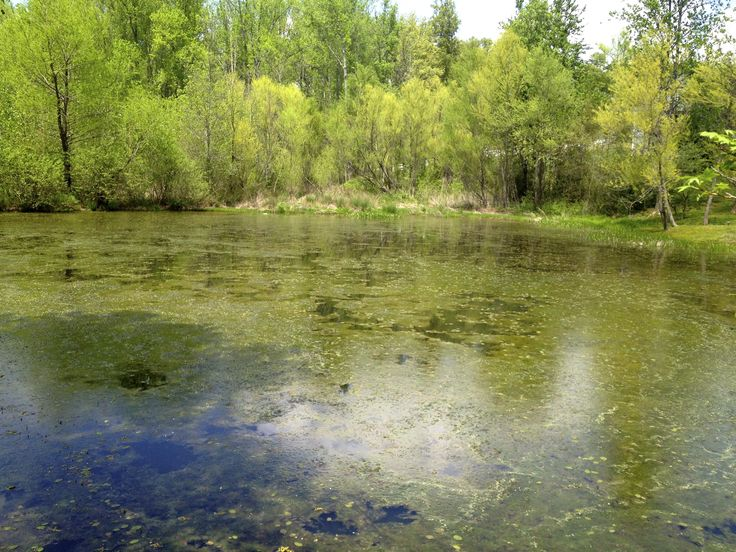 Farm pond ponds and fish ponds on pinterest for Farm pond fish