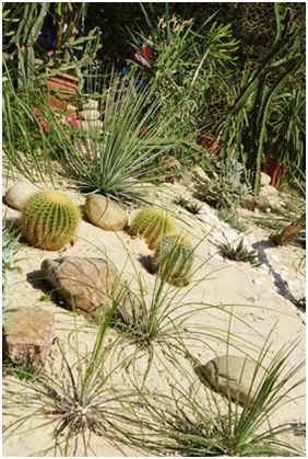 54 Best Images About Desert Landscaping Ideas On Pinterest