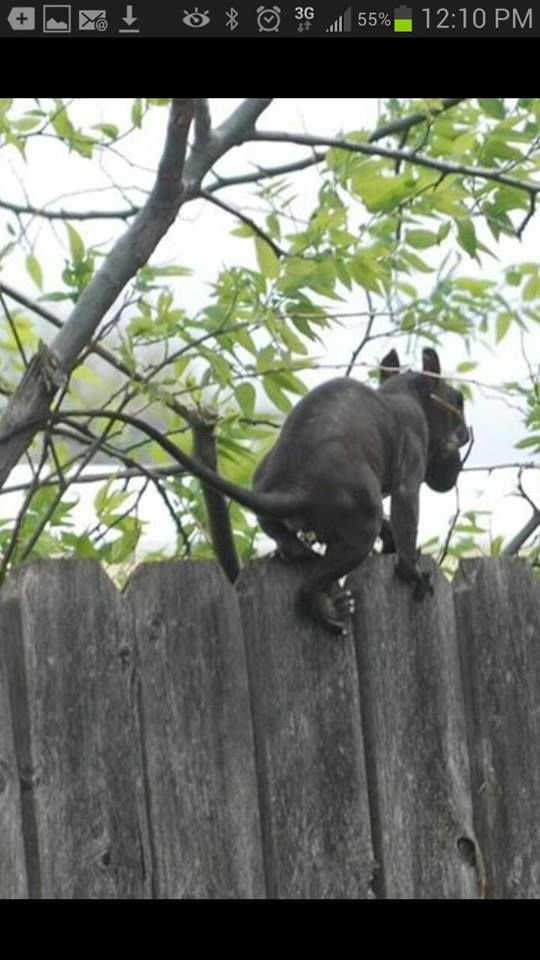 What the hell is this animal it was spotted in New Jersey