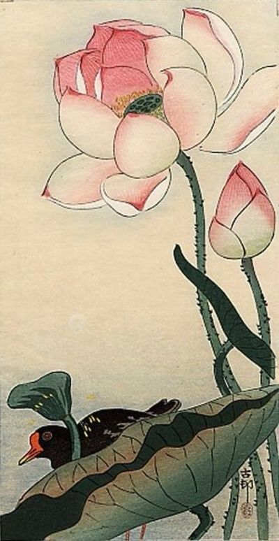 A Gallinule Beneath Flowering Lotus, by Ohara Koson, 1910. Woodblock print