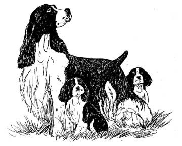 springer spaniel embroidery   The Boutique ~ Help Support ESSCLI-Rescue