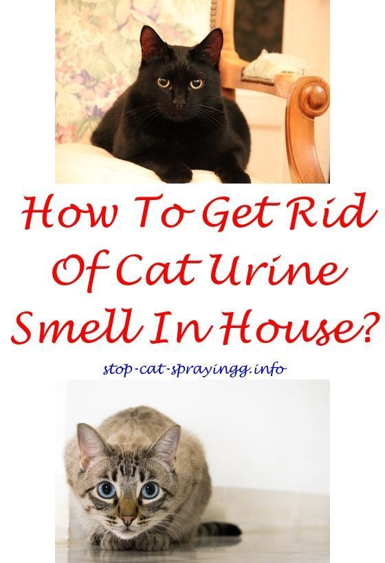 Catpee Will My Cat Spray After Being Neutered How To