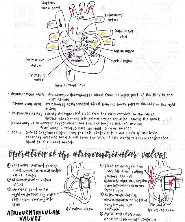 """Here's my Physics """"cheat sheet"""" it's Physics P1 tomorrow!!! 2nd last paper for me finally!!!.Pure sci kids, we can do this!!! It's almost the end!!! A level peeps, push on, y'all can do it!!!!...#study #studying #studyblr #studyspo #studygram #studyhard #stationery #follow #stationeryaddict #muji #studytime #exams #revision #handwriting #notes #motivation #timetable #schedule #olevels #brushables #mildliners #student #studentlife #sgstudyblr #studyinspo #100daysofpro..."""