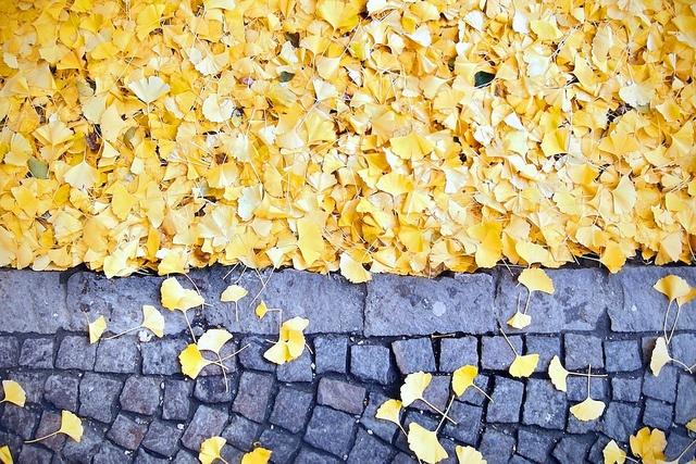Ginko Leaves by Der Himmel über Bozen, via Flickr