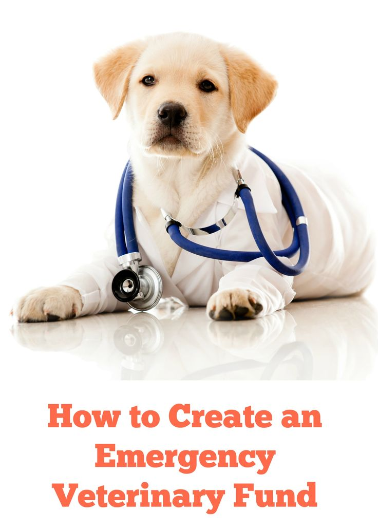 HOW TO FIND MONEY TO CREATE AN EMERGENCY VET FUND Having your household emergency fund set up is a very important part of being financially responsible. However, what about your Emergency Vet Fund?...