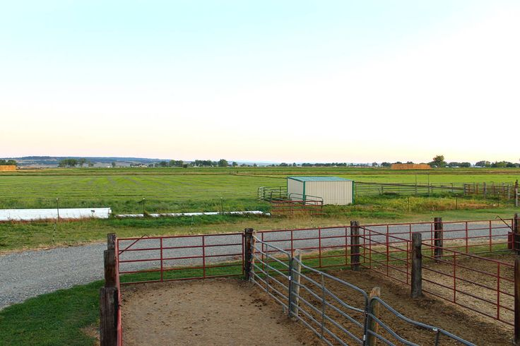 Horse Property for Sale in Yellowstone County in Montana. Beautiful custom home built in 2004 on 19.58 acres. Fenced and cross fenced, 3 loafing sheds for horses, with water to each. Irrigated hay fields which have produced 25-26 ton a year, potential to plant more. Large barn, up to 5 stalls with outdoor runs.