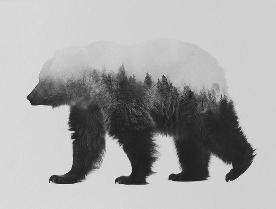 Poster | BROWN BEAR (BLACK & WHIT… von Andreas Lie