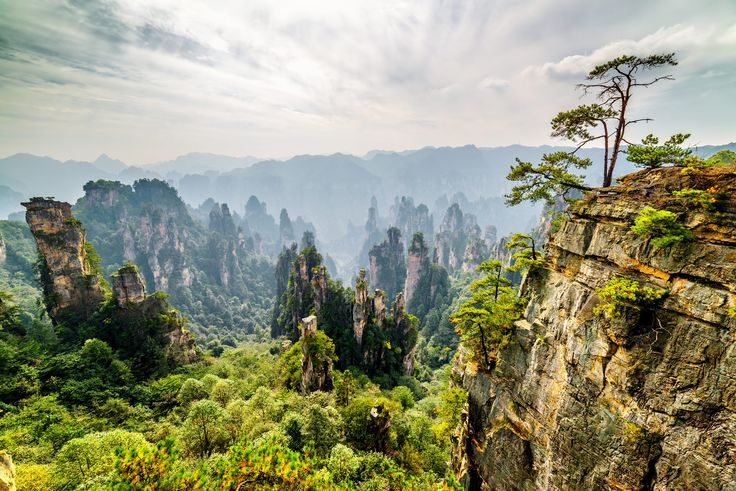 Picture of rock pillars of the Tianzi Mountains in the Wulingyuan region of China