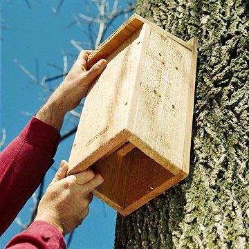 """""""Bat houses work best if they're at least 2 feet tall, 1 foot wide, and 3 inches deep. Hang them 10 to 15 feet above the ground and place them in a sunny spot where they can absorb lots of heat during the day. (Painting the boxes black is helpful.) Mount bat houses on poles, buildings, or other structures."""""""