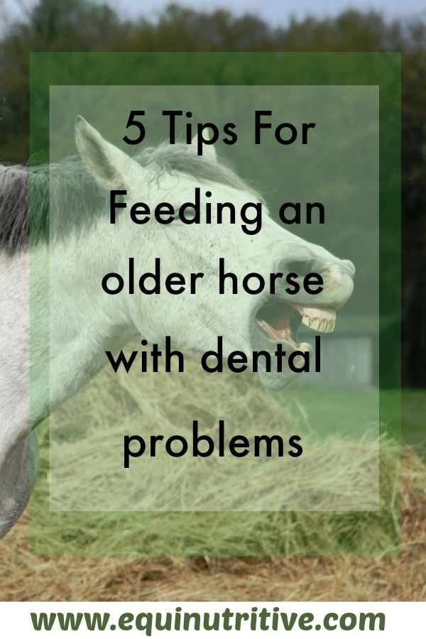 Have an older horse? You'll want to read this post about feeding a horse with dental problems at: https://equinutritive.com/blog/dental-problems/