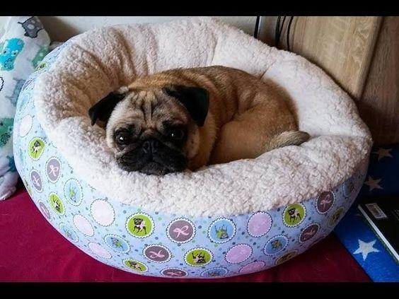 25 einzigartige hundekorb ideen auf pinterest tier hund hundeecke und hunde videos. Black Bedroom Furniture Sets. Home Design Ideas