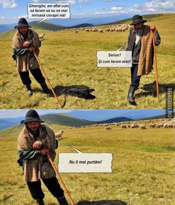 Discuție între ciobani. http://9gaguri.ro/media/discutie-intre-ciobani
