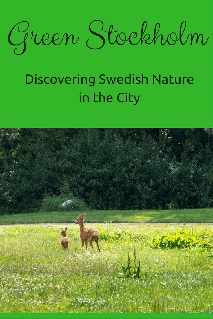 Exploring Green Stockholm - urban parks, an eco village and the woodland cemetery, a UNESCO heritage site
