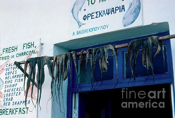 Fresh squid hanging from a taverna doorway displaying the day's catch. Click image to buy  prints.