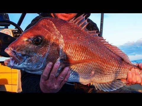 Reedy's Rigz By Snapper Snatcher Pre Made Fishing Rigs