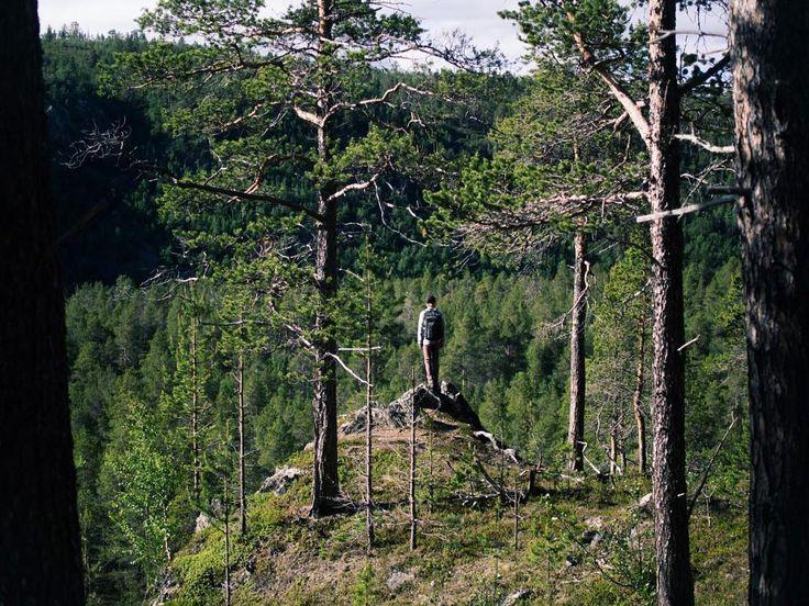 Photo by Maria Mikkonen @mikkonenmaria Feeling small on the edge of the Kevo Canyon #luonnossa #lapland #kevo #suomiretki #retkipaikka #lappi #utsjoki #filmlapland #finnishlapland #arcticshooting #filmlocation