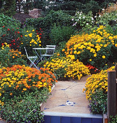 243 best flower garden ideas images on pinterest 2018 year big ideas for a small garden bright yellow and orange marigolds demand attention in several workwithnaturefo