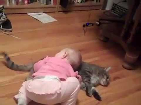 La Paciencia De Un Gato Con Un Bebe ★ humor gatos - video divertido gatos chistosos risa gato - YouTube