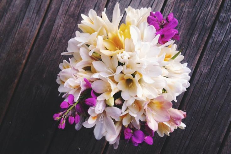 #freesias are finally #blooming - welcome back to #australia #spring