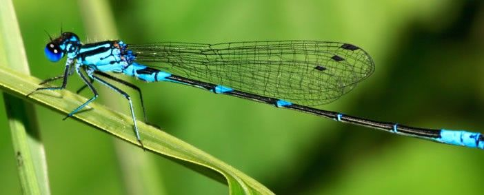 20 Dragonfly Facts, Pictures and Symbolism