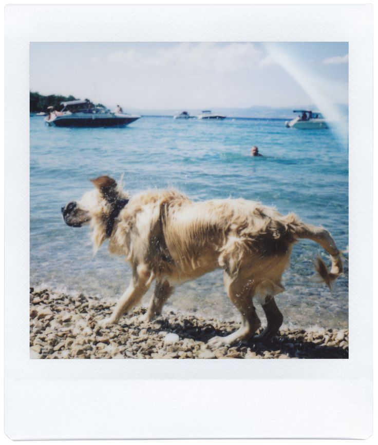 Photo taken with the Lomo'Instant Square!