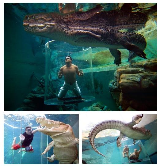 """[ Loisirs ] – Crocosaurus Cove Aquarium / Darwin - Australie - Twio de l'équipe Twio    Situé en plein coeur de la ville de Darwin en Australie. Pour env. 30$ l'entrée vous pourrez voir plusieurs reptiles dont des crocodiles principalement.   Le parc possède une attraction """"The cage of death"""" qui, pour 150$, vous fera plongez en plein milieu d'un bassin de crocodiles. Idéal comme attraction sur une journée.    http://www.twio.fr/twio/twio/-/id/3664"""