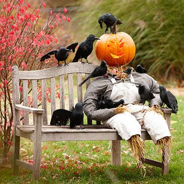 Scarecrow on Duty        Set a Halloween scene with this scarecrow display on a front porch chair or yard bench. Pose the artificial birds as desired, then wire the pieces in place to keep the display intact throughout the season.