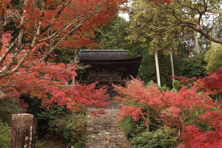 先週行った神護寺の紅葉ピークは過ぎてましたが綺麗でした #kyoto #jingoji #autumn #autumnleaves #takao #beutiful #trip #travel #kyototrip #photo #京都 #神護寺 #紅葉 #寺 #高雄 #旅 #旅行 #京都旅行 #京都紅葉