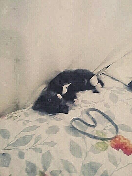 Marceline acting cute