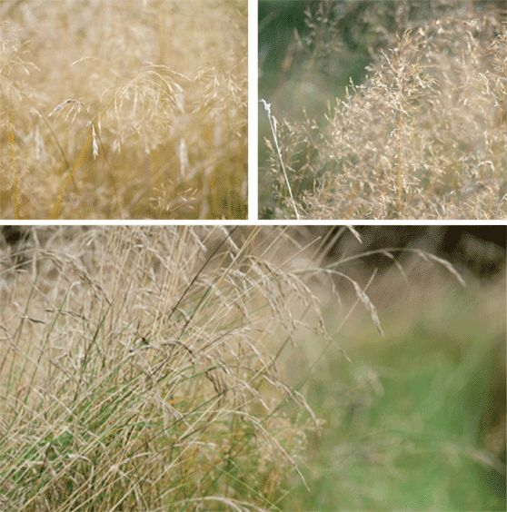 Grasses in the wild garden