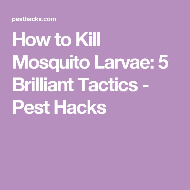 How to Kill Mosquito Larvae: 5 Brilliant Tactics - Pest Hacks