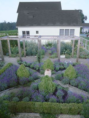 country living lavender boxwoods